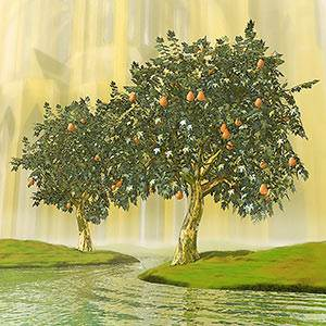 The Fall Of Man Lesson 4 In New Life In Christ Course 3